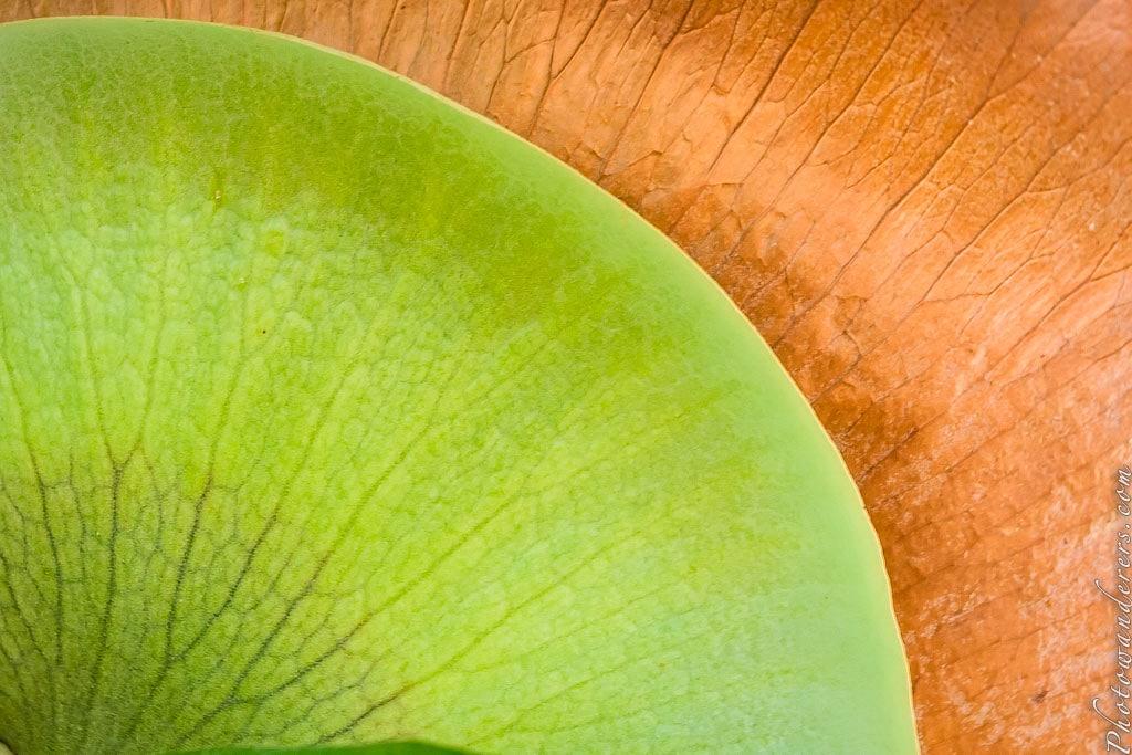 Олений папоротник, Ботанический сад На-Айна-Кай | Staghorn fern