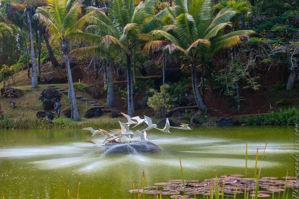 Полет тропических птиц | Flight of the Tropic Birds by Pancho Vinning