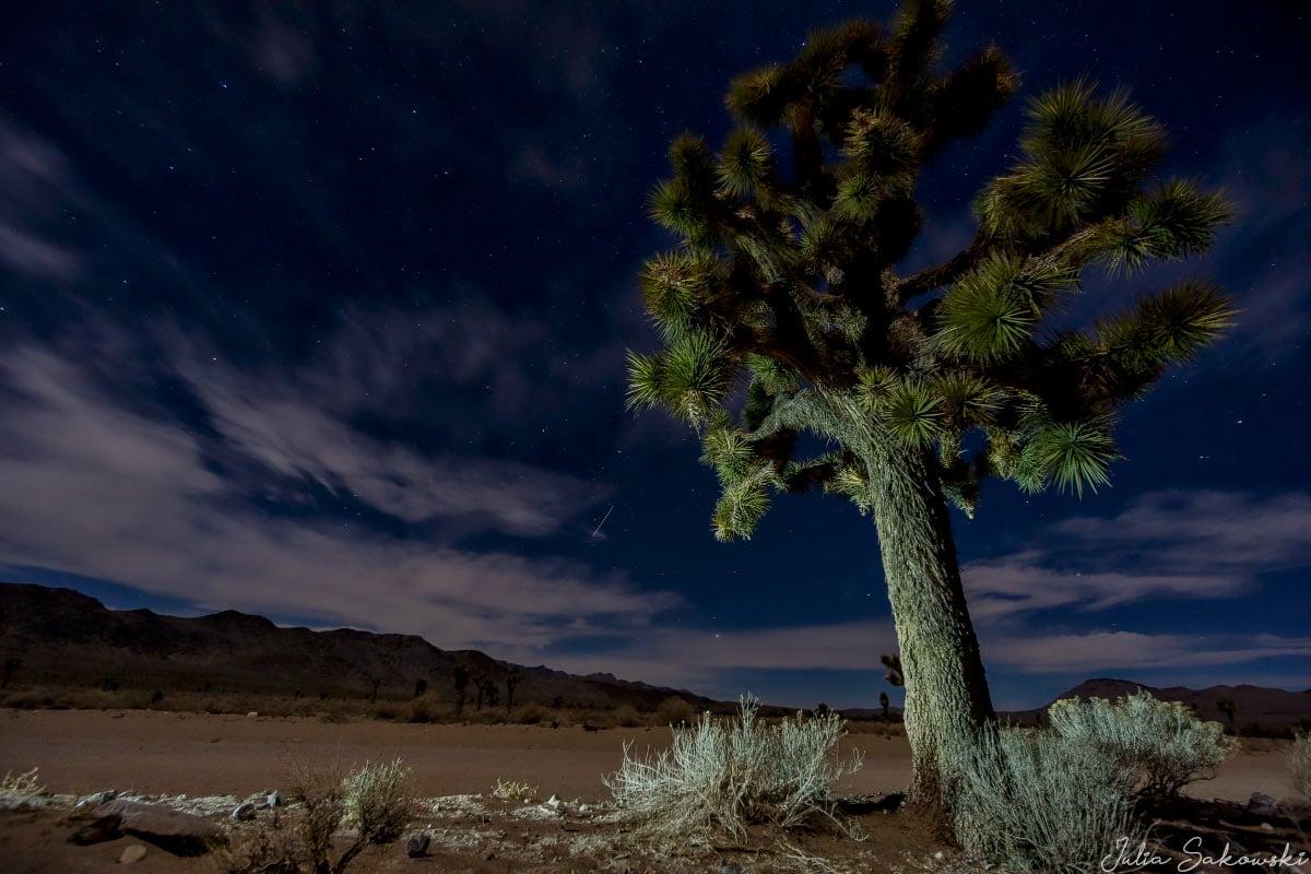 Дерево Джошуа в Долине Смерти, Калифорния