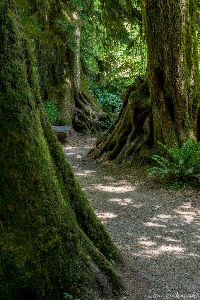 Бородатый лес в парке Олимпик, Вашингтон. Путешествия 2018 года.