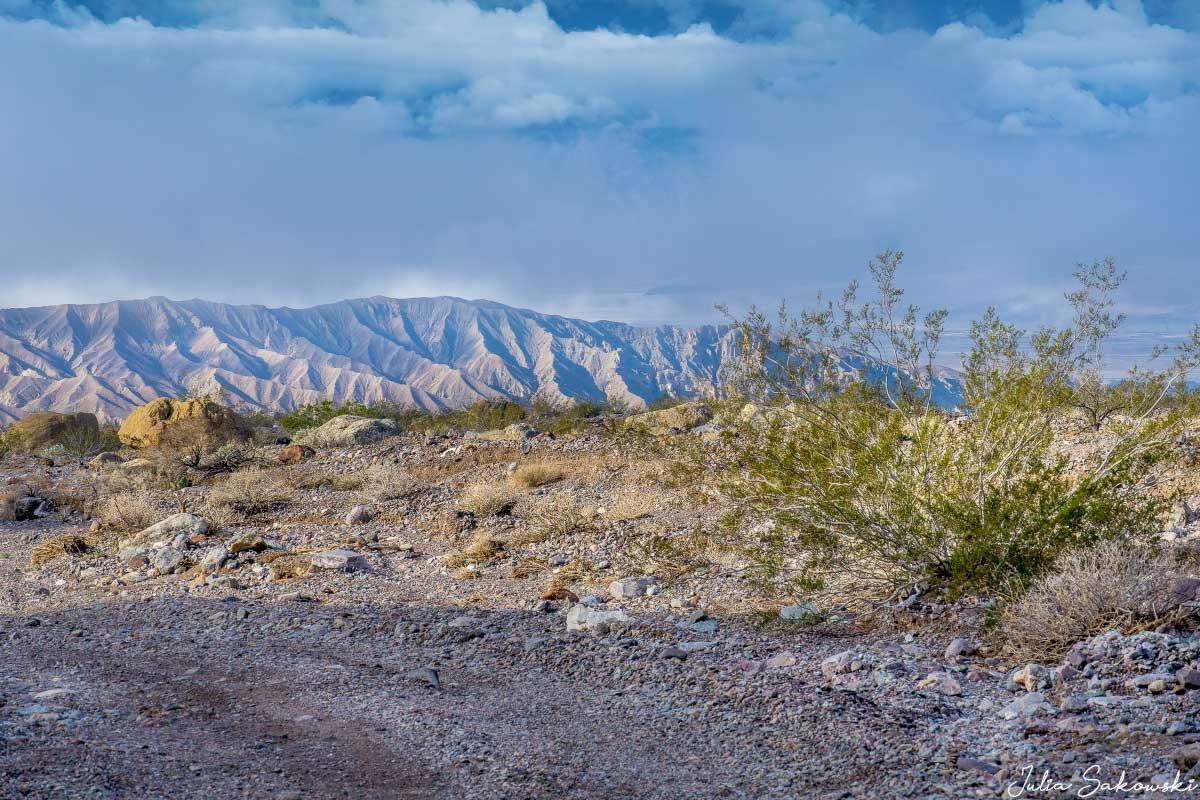 Одинокий креозотовый куст на обочине дороги. Каньон Эхо