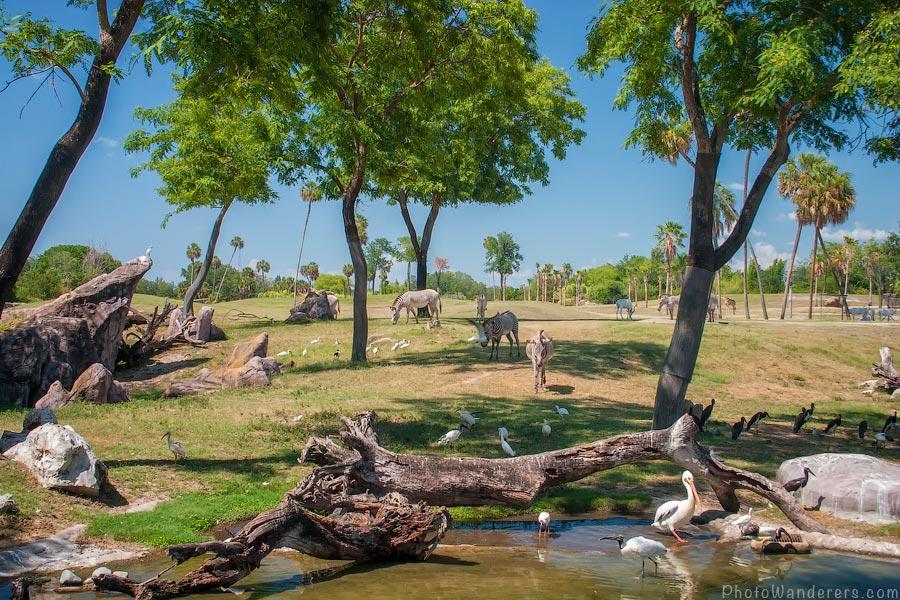 Зебры на Краю Африки (Edge of Africa)