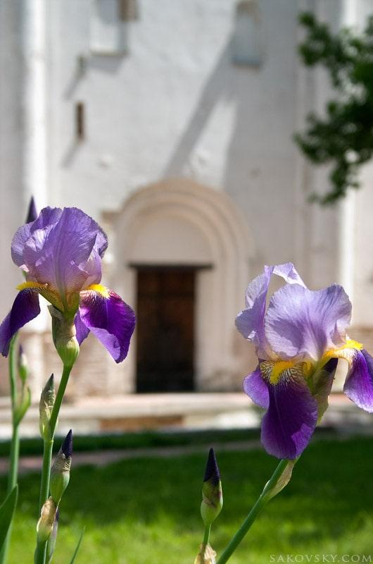 Петушки у входа в Борисоглебский собор
