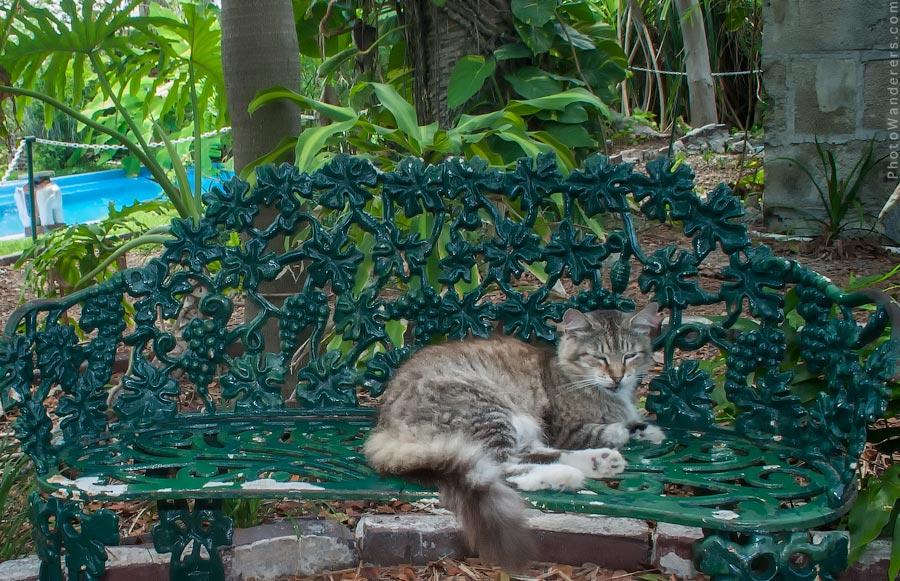 Дом Хемингуэя – музей, где кошкам можно все