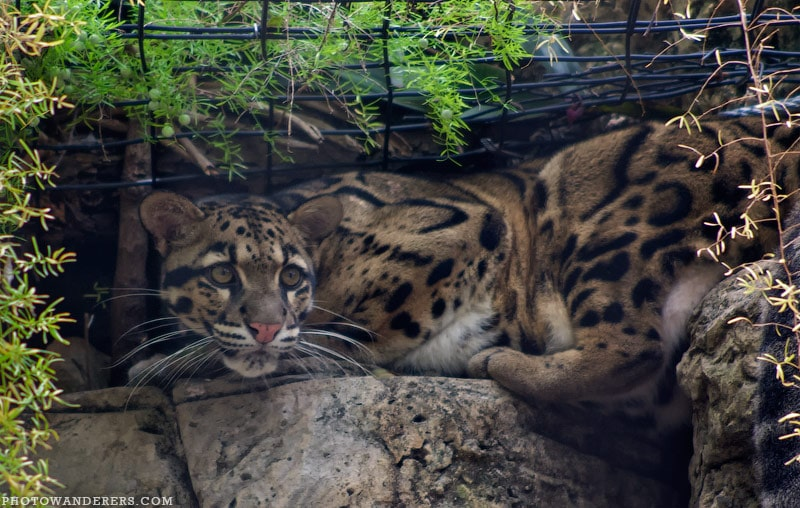Зоопарк Лоури в Тампе