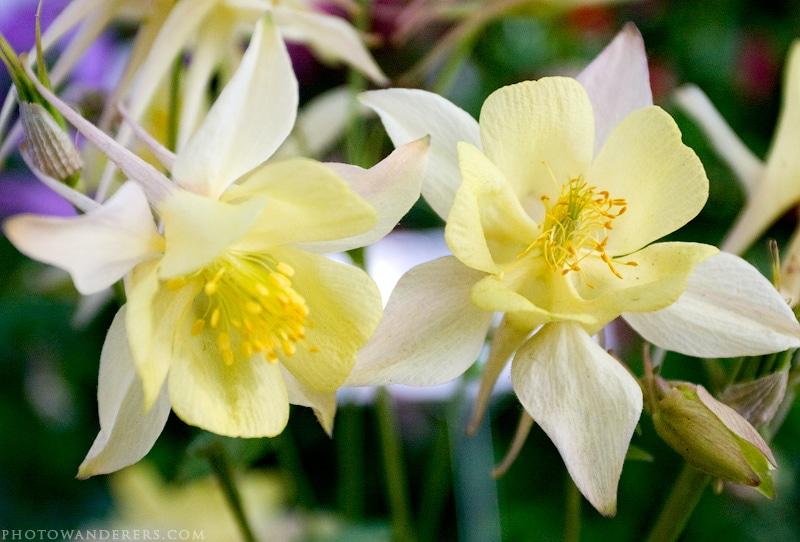 Желтые цветы в Саду художников