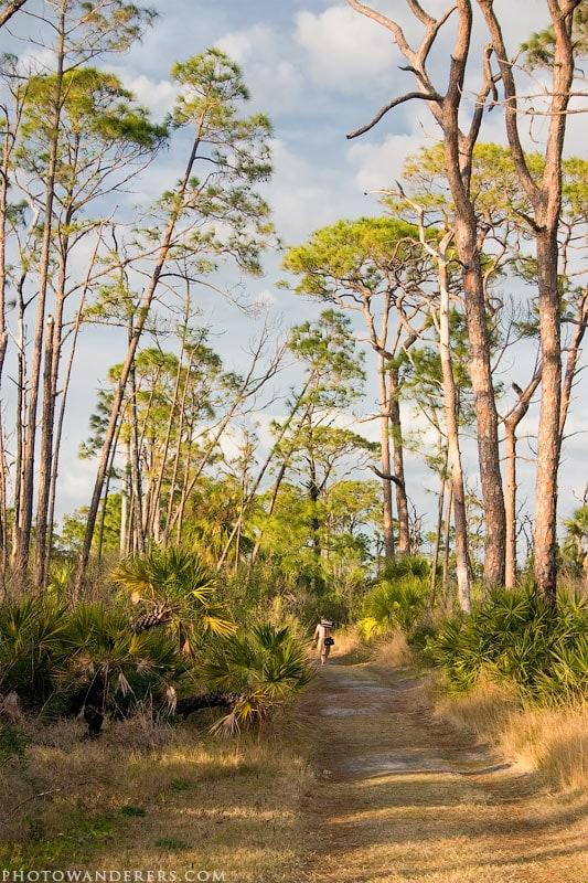 """Лесная тропинка на острове """"Медовый месяц"""", Honeymoon Island, Florida"""