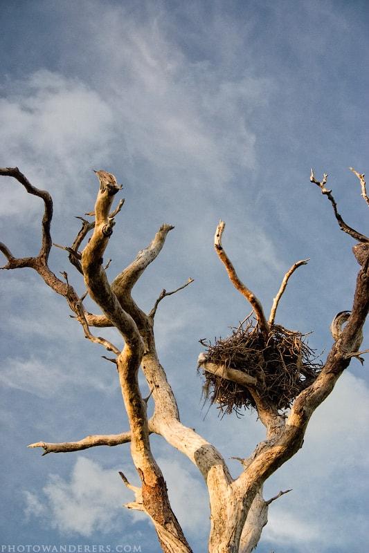 Чье-то гнездо