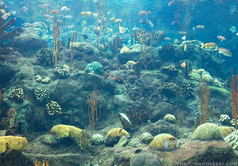 Галерея Кораллового Рифа, Флоридский Аквариум