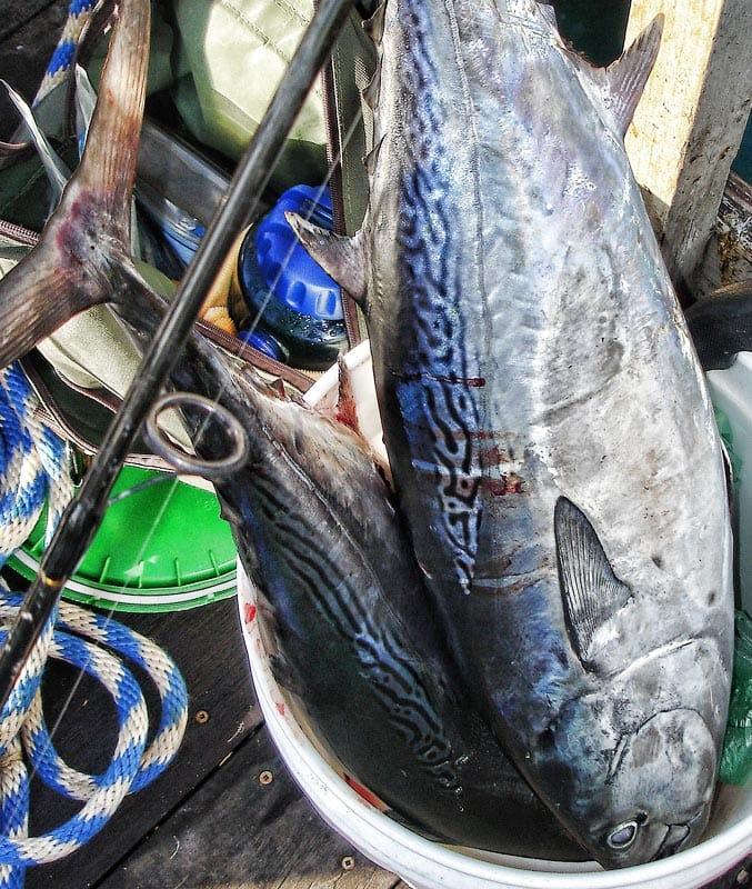 Рыбалка, Флорида