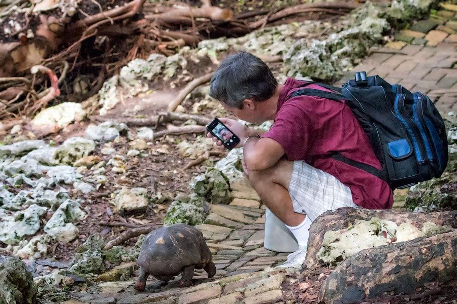 Селфи с черепахой, заповедник на Барбадосе | Selfie with turtle, Barbados Wildlife Reserve