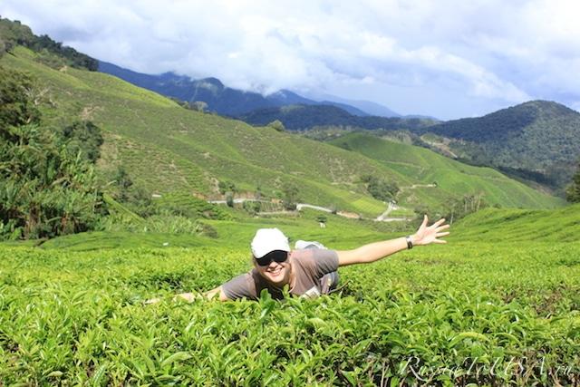 Чайные плантиции, Камерон-Хайлэндс, Малайзия
