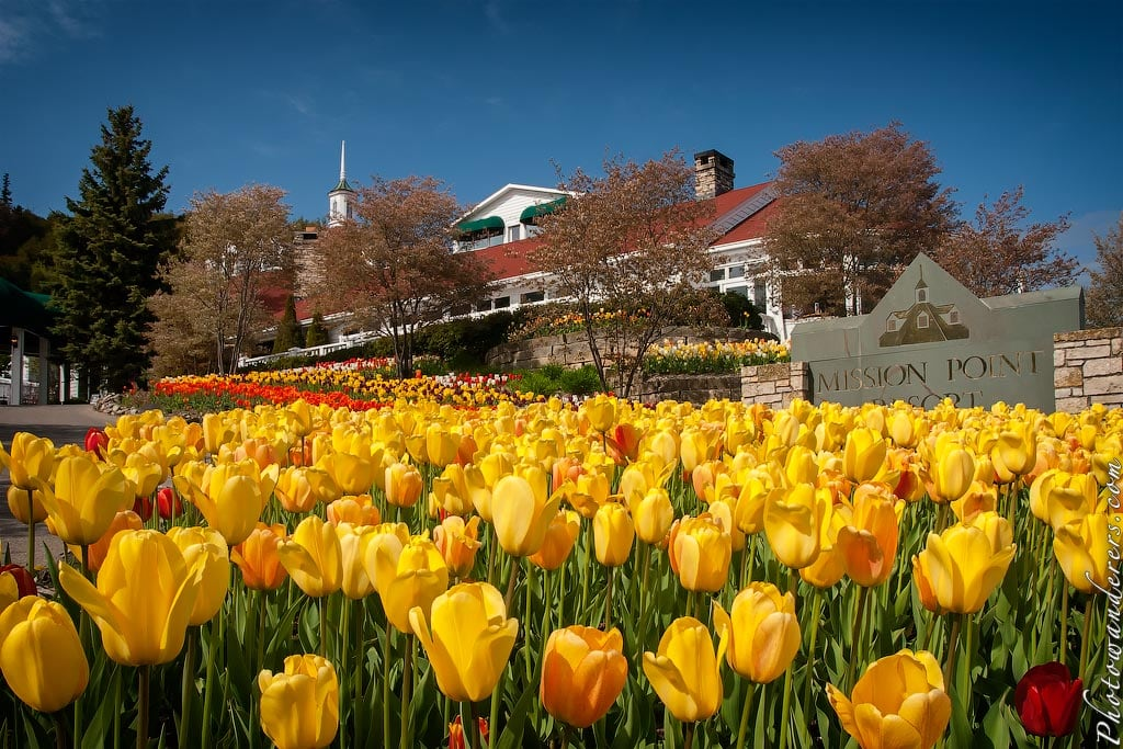 "Тюльпаны перед отелем ""Mission Point Resort"", остров Макино, Мичиган 