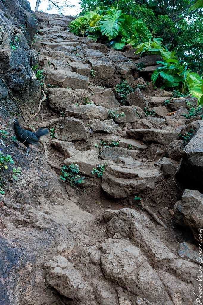 К райскому пляжу Ханакапи сквозь заросли «Парка Юрского периода» | To Hanakapiai Beach through «Jurassic Park»