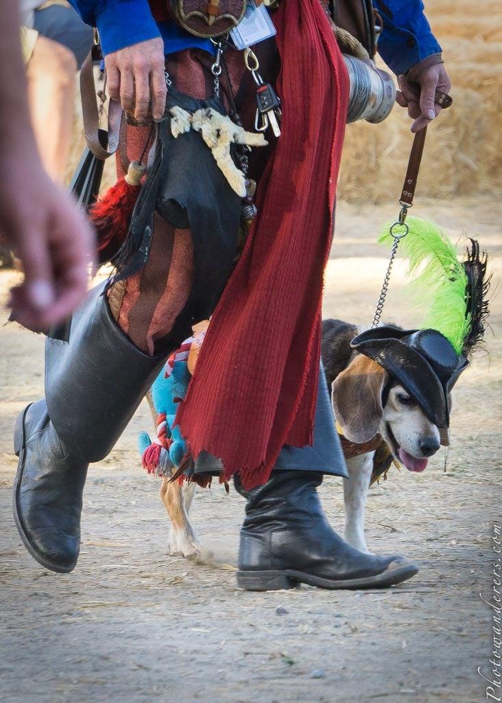 Ренессансный Бигль | Renaissance Beagle