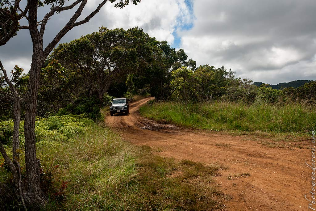 У начала тропы на топь Алакаи | Beginning of Alakai Swamp trail