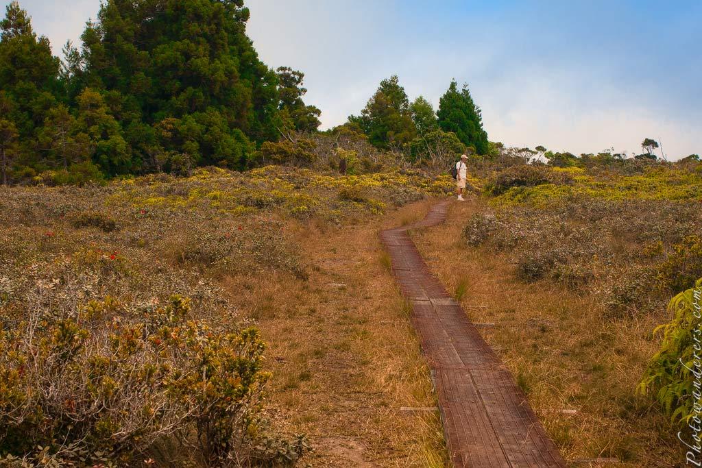 Тропа на топь Алакаи, Кауаи, Гавайи | Alakai Swamp trail, Kauai, Hawaii