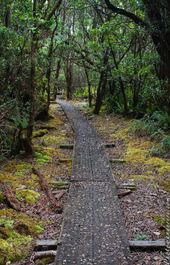 Горный мокрый лес, тропа через Алакаи, Каиаи, Гавайи
