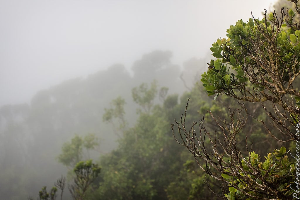 Туман в конце тропы по болоту Алакаи | Fog in the end of the Alakai Swamp Trail
