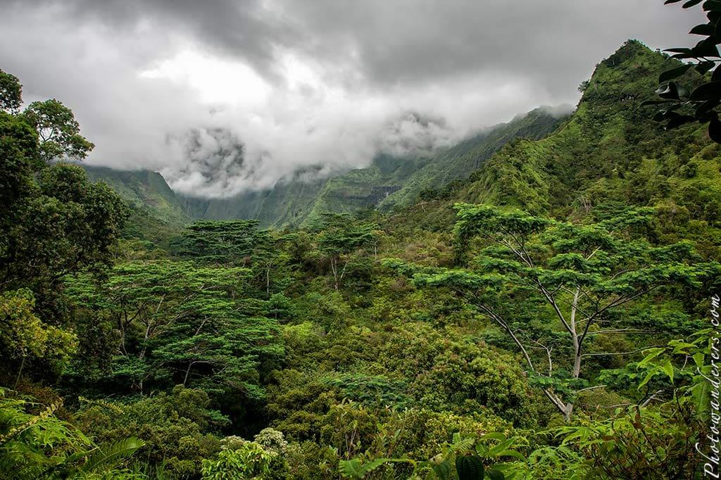 Тропический лес возле кратера Ваиалеале | Rain forest near Waialeale crater